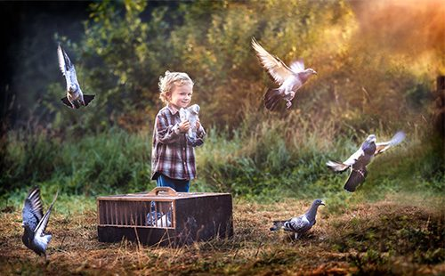 Мальчик выпускает голубей