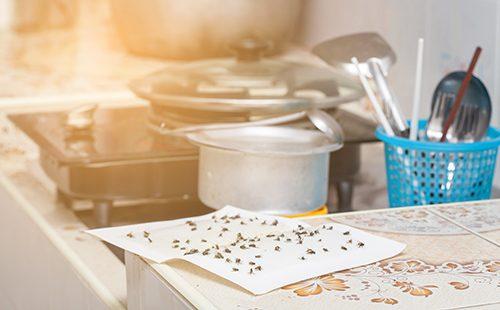 Липкая ловушка для мух на кухне
