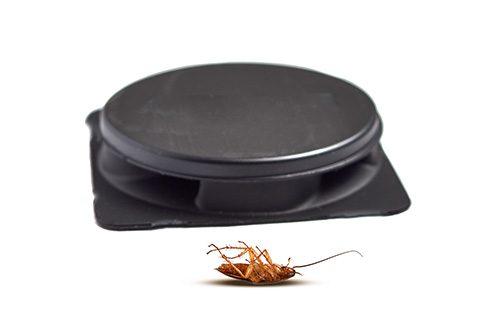Ловушка тараканов