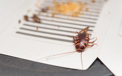 Ловушка с мертвым тараканом