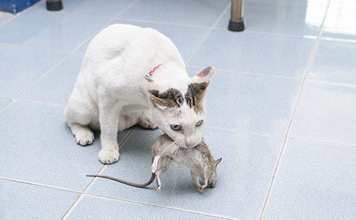 Кошка словила мышь