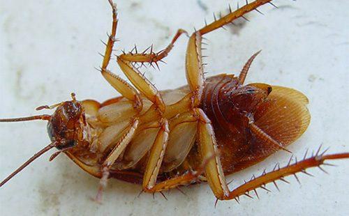 Таракан лежит на спине