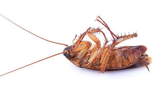 Мертвый таракан