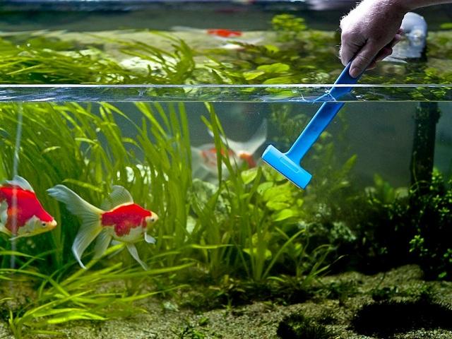 Скребок и аквариум