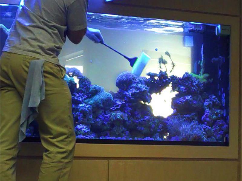 Очищение аквариума